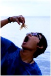 crab-sushi